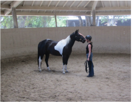 Anna Thomas teaching Monty Roberts Introductory course moment of Join-Up